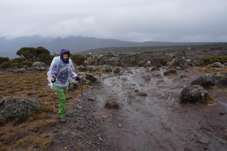 Kilimanjaro Moorland