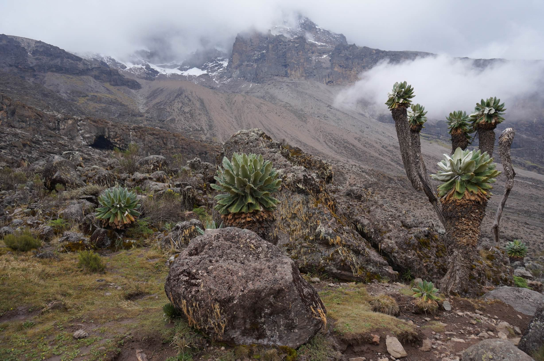 09_Kilimandscharo_Lava_Tower_Barranco_Camp (11)