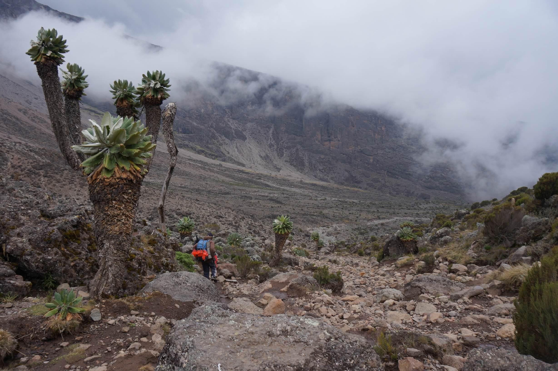 09_Kilimandscharo_Lava_Tower_Barranco_Camp (12)