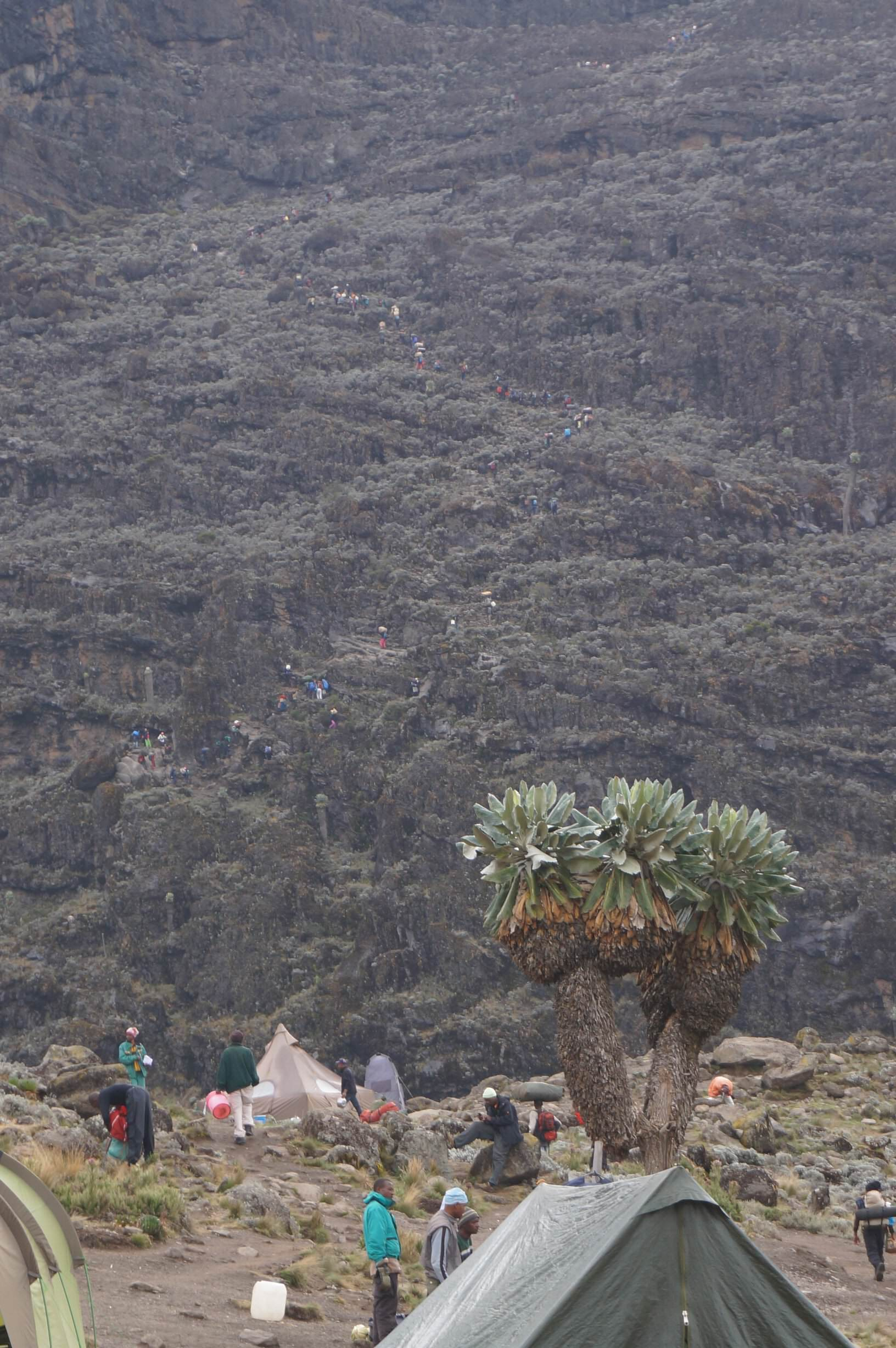 10_Kilimandscharo_Barranco_Camp (9)