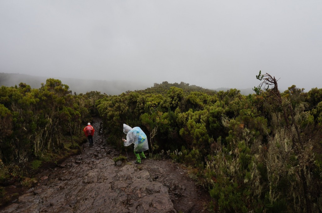 19_KIlimandscharo_Rain_Forest (8)