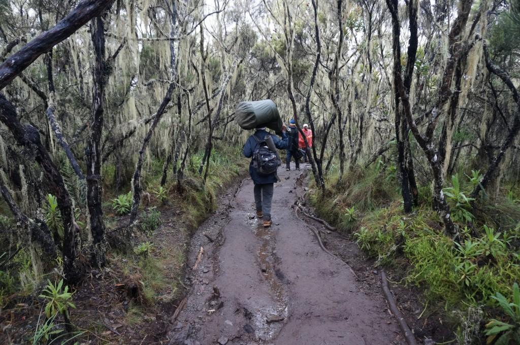Kilimandscharo Mweka Gate
