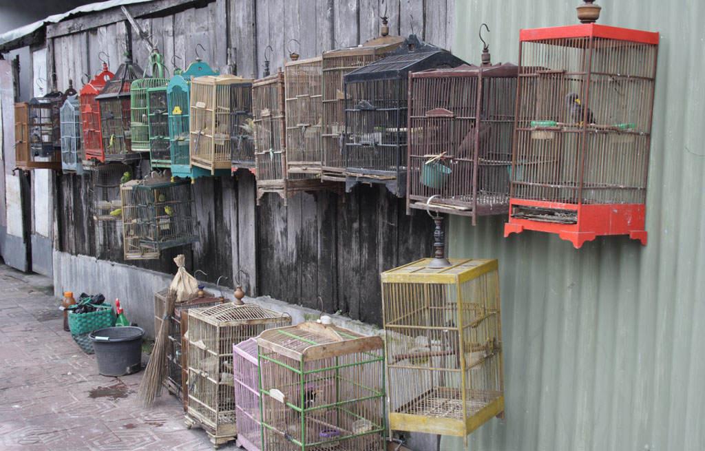 Birdmarket Yogyakarta
