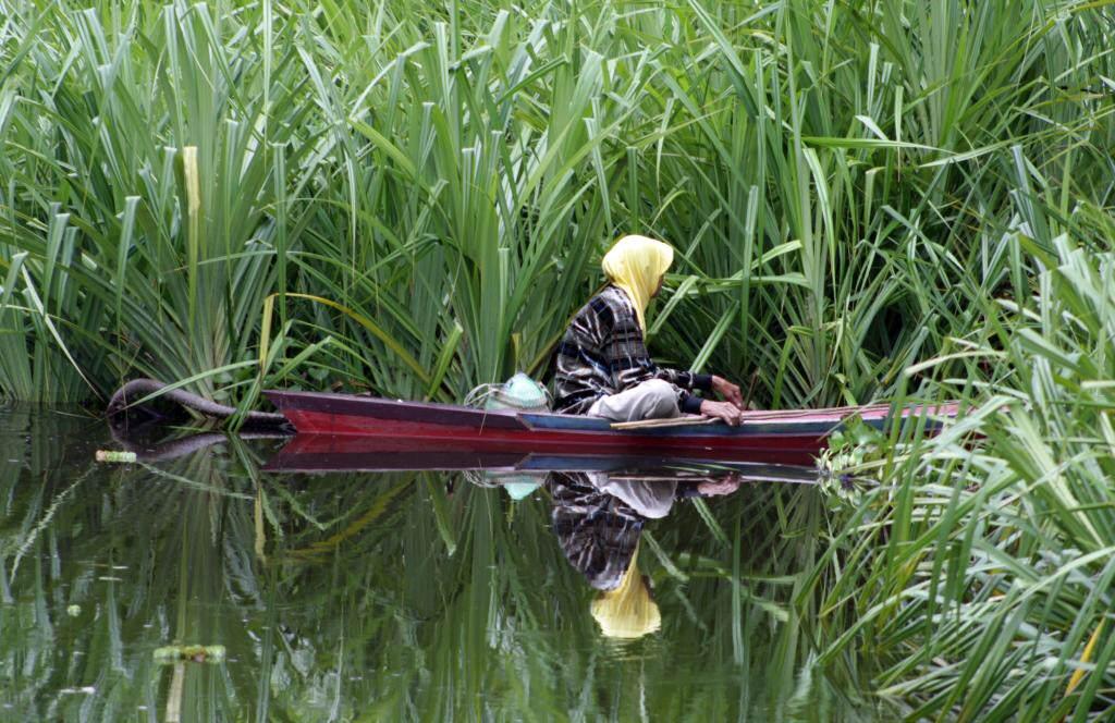 Fischer auf dem Sekonyer, Tanjung Putin National Park