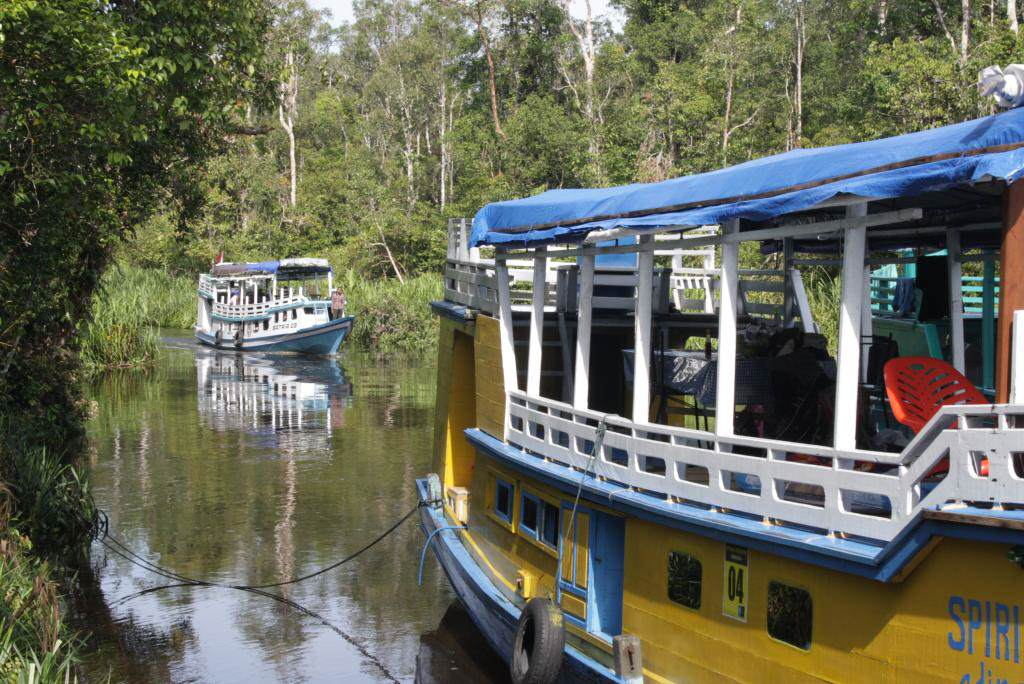 Klotoks im Tanjung Putin National Park