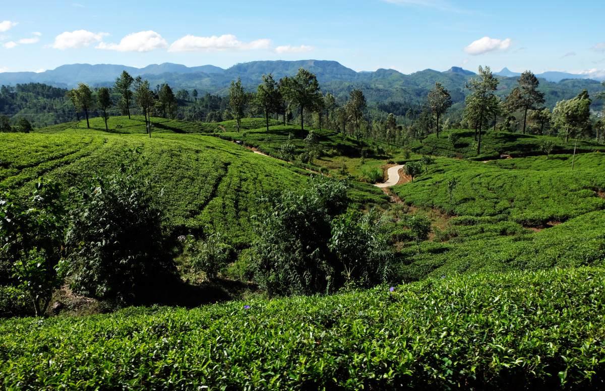 Zugstrecke Hochland Sri Lanka