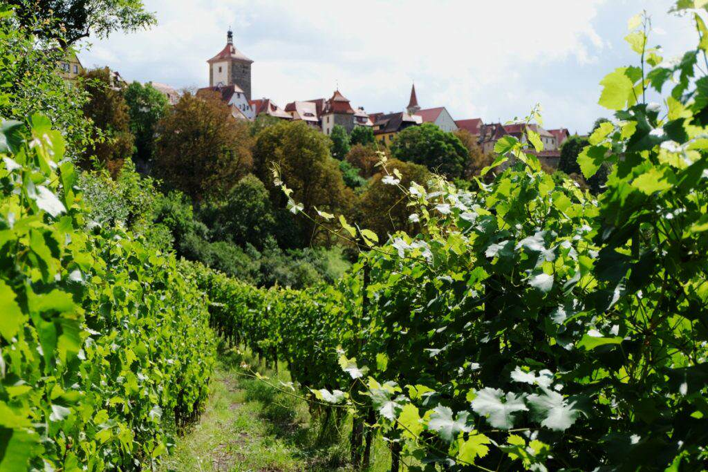 Wein- und Gesteinslehrpfad Rothenburg