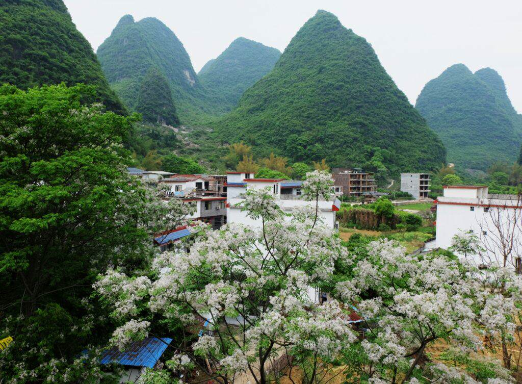 Tea Cozy Yangshuo