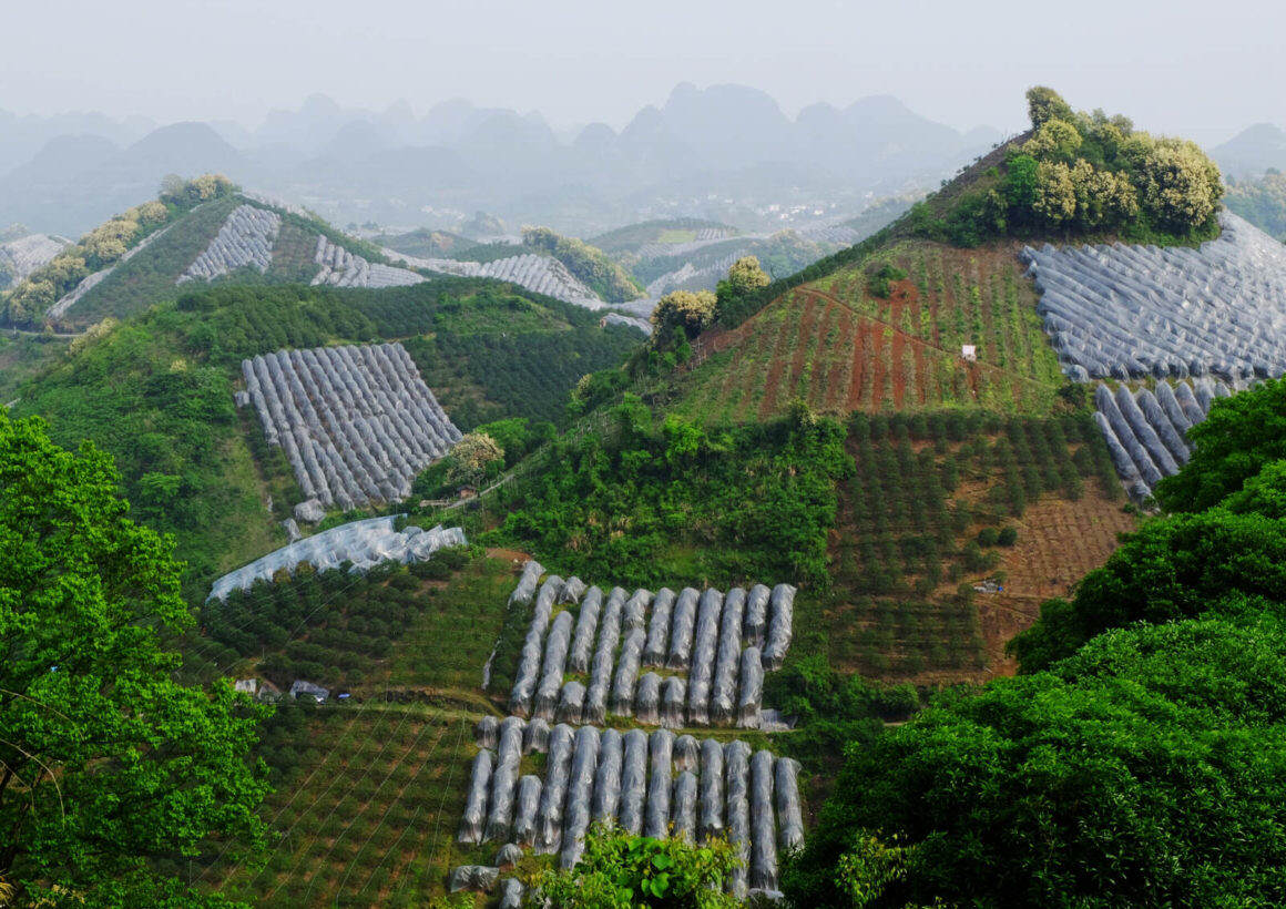 Sevenn Star Tea Plantation Yangshuo