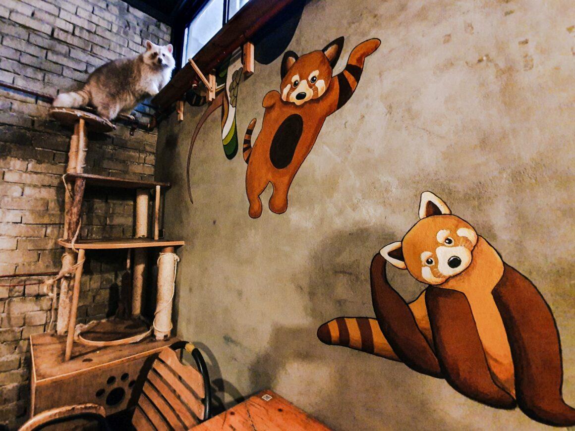 Racoon Café Blind Alley Seoul