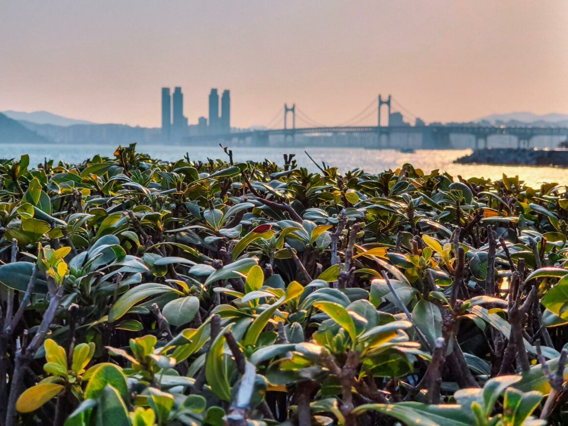 Marine City Busan