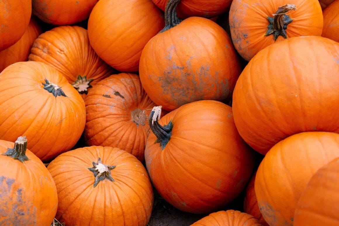 Pumpkin Patch Sauvie Island