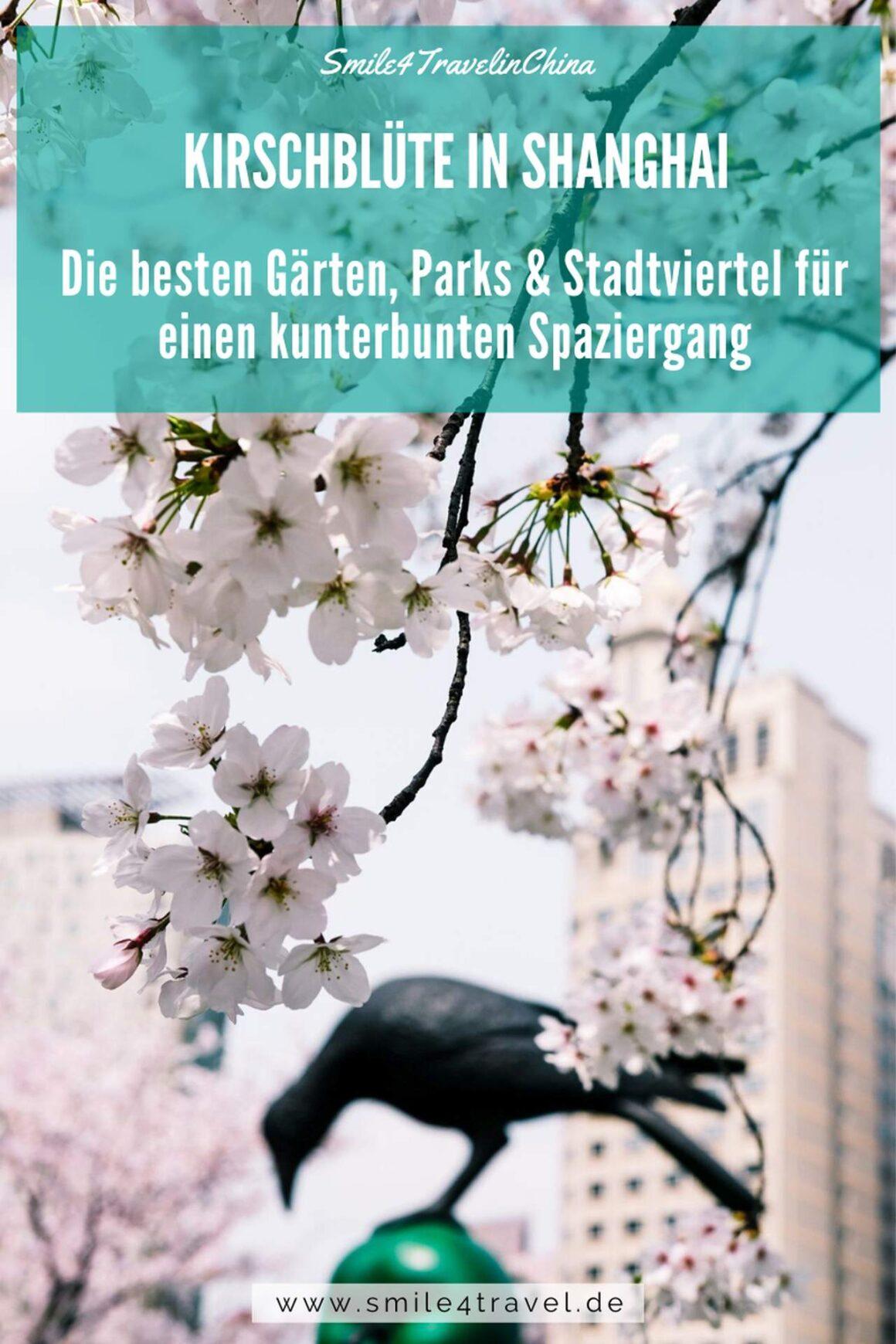 Shanghai's beste Parks zur Kirschblüte