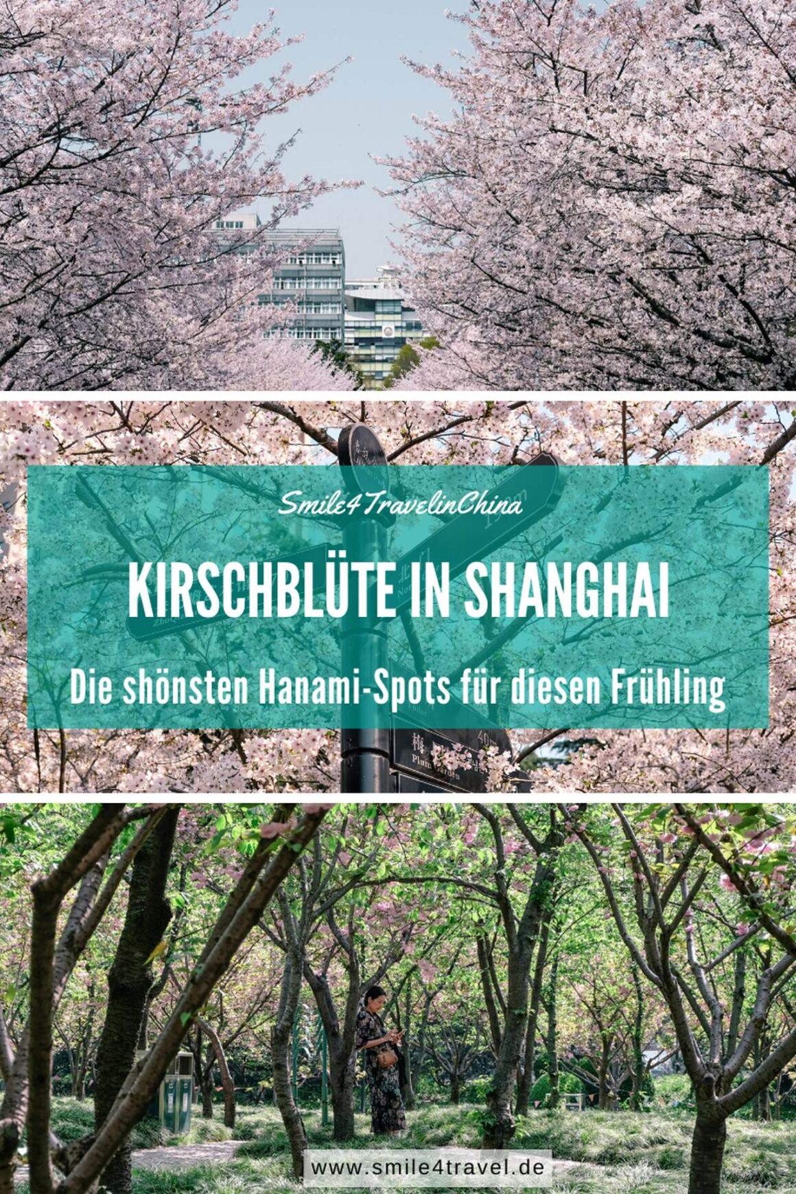 Hanami Spots Shanghai
